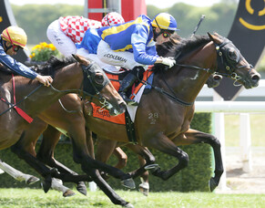 Zabeel's son to stand at Long Acres