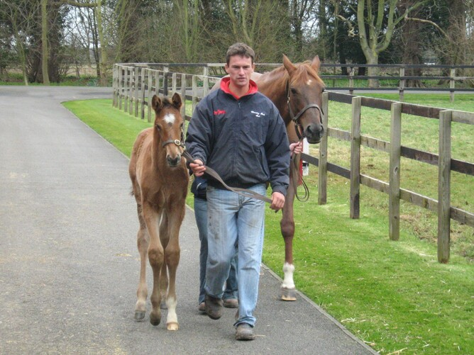 That's me leading the '08 Dansili x Fantasize(Groom Dancer) colt foal.  Do you like my new jacket!