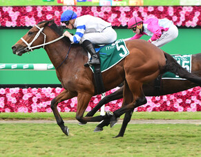 Kiwi-bred Kolding shines in Queensland Guineas