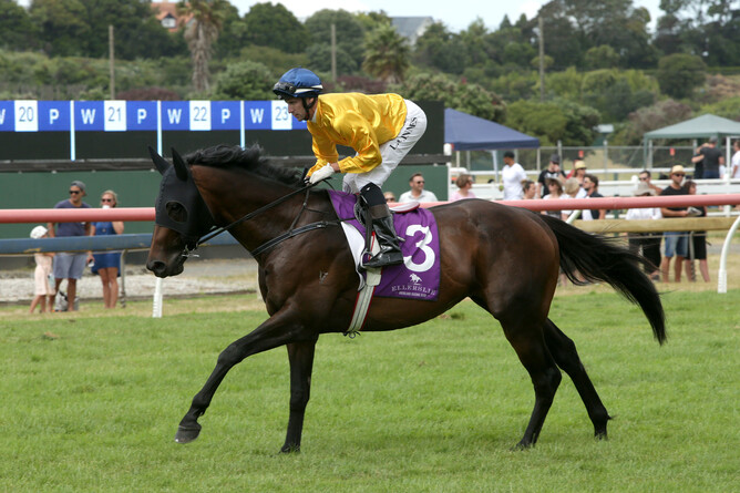 The stakes winning son of Makfi, Savile Row, has been retired to stud at Kevin Hickman's Valachi Downs - Trish Dunell