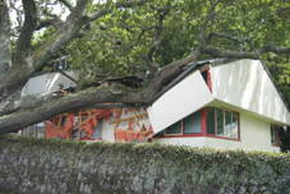 The NZTBA office, damaged by a fallen oak tree