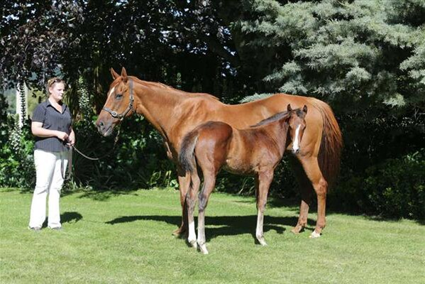 Parfore and her Darci Brahma foal at Wentwood Grange - Trish Dunell