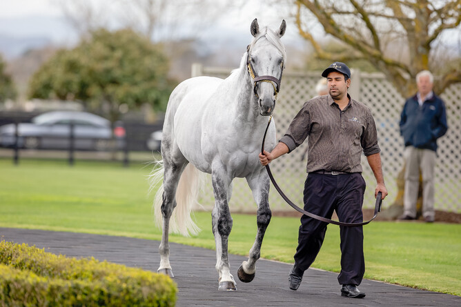 Westbury Stud parade Reliable Man for NZTBA members last Sunday
