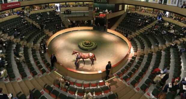 Goffs Sales in Ireland