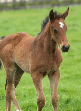 2018 FOAL GALLERY - Future Champions